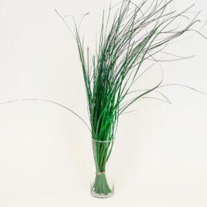 BEAR GRAS MAZZO H.75 CMVERDE