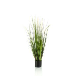 ALOPECURUS GRASS PIANTAC/VASO CM.90 VERDE