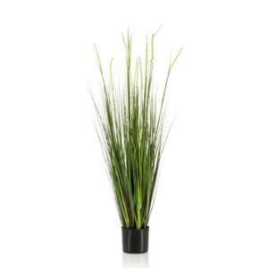 ALOPECURUS GRASS PIANTAC/VASO CM.120 VERDE