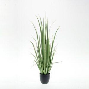 YUCCA GRASS PIANTA C/VASO CM.120 VERDE