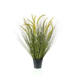 CATTAIL GRASS PIANTA C/VASO 15X CM.70 VERDE