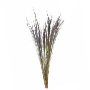 ERBA GRASS GR.250 NATURALE