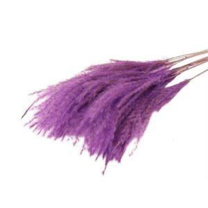 FLUFFY SILVER GRASS PZ.10 H.75 CM. VINACCIA