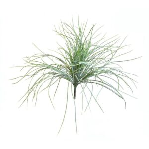 BEAR GRASS BUSH CM.55 VERDE