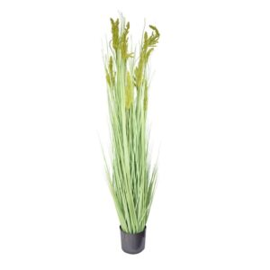 GRAIN GRASS PIANTA C/VASO CM.150 VERDE